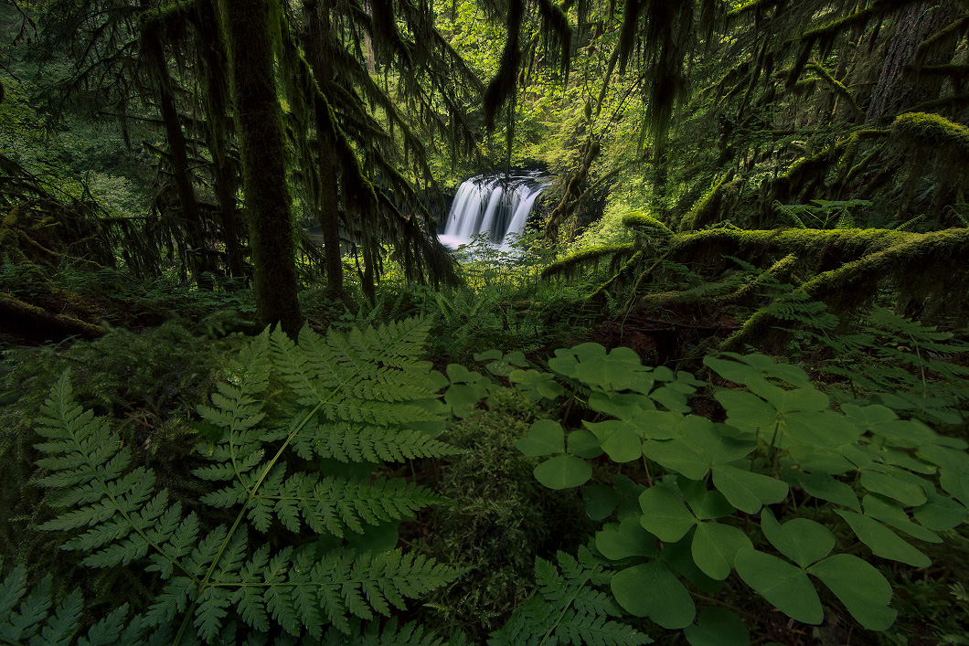 A fine art nature photograph of a waterfall in a rainforest called upper butte creek falls in Oregon by Bryce Mironuck