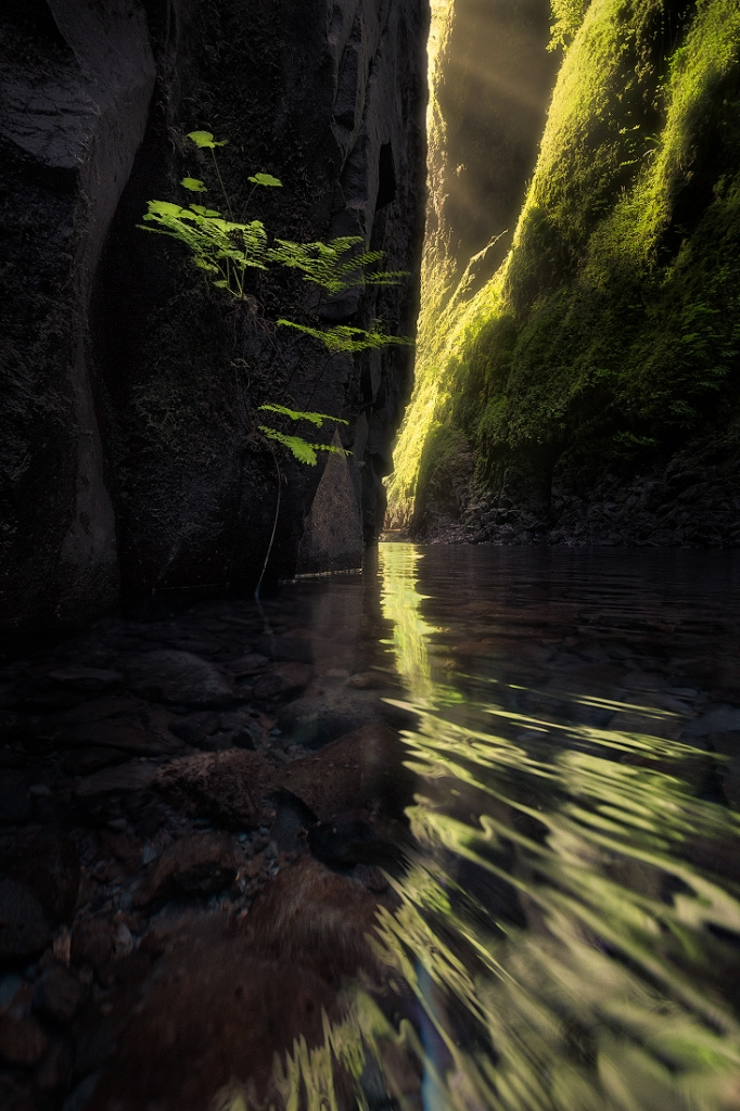A fine art nature photograph taken of a rainforest canyon in Oregon called Oneonta gorge in early morning light by Bryce Mironuck
