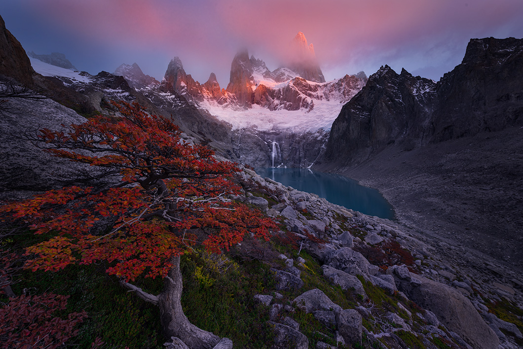 A fine art nature photograph taken at sunrise beside a lenga tree at laguna sucia with fitzroy mountain in Los Glaciares National Park, Argentina by Bryce Mironuck