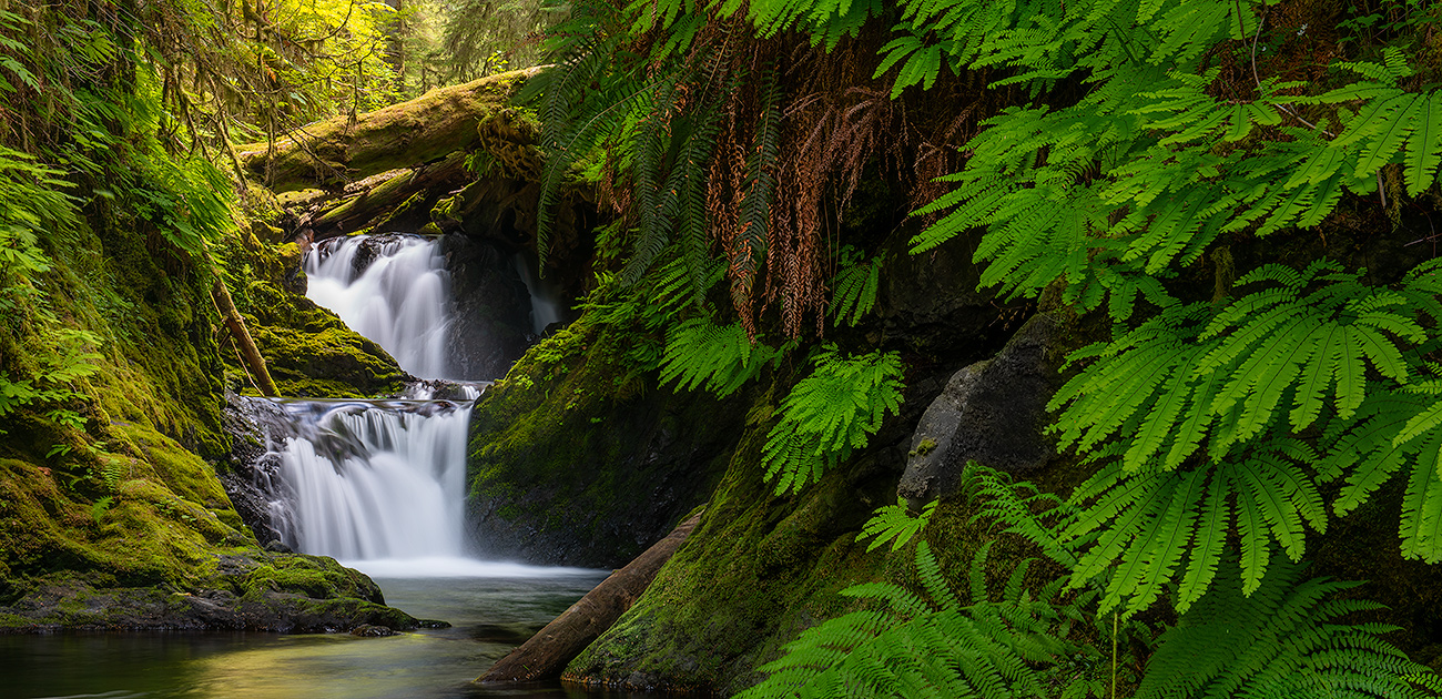 Bryce Mironuck Nature Photography - Latest Print Release